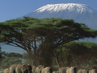 Climb kilimanjaro with Chelsea Tours professional mountain guides