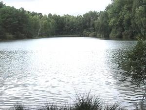 Little Lake White