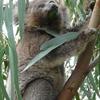 Phillip Island Nature Park Conservation Centre