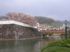 Kofu Castle With Cherry Blossoms
