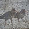 Koshi Tappu Wildlife Reserve 5