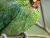 Koshi Tappu Wildlife Reserve 4