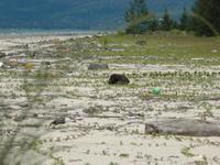 Wetlands Kuching Parque Nacional