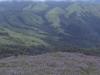 Kuriniji Flowers At Baba Budan Hill Ranges Chikkamagaluru Karnataka