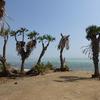 Lac Salé Afdera