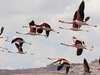 Laguna Colorada Flamingos