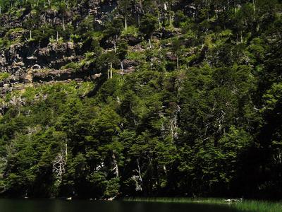 Tolhuaca National Park