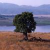 Lake Henshaw