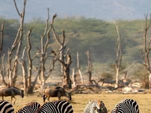 Day Excursions. Lake Manyara National Park Photos