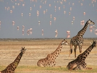 2 Days Tanzania Safari