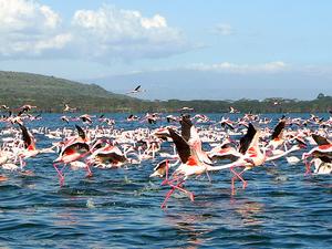 5 Days Safari Masai Mara, Lake Nakuru And Lake Naivasha Fotos
