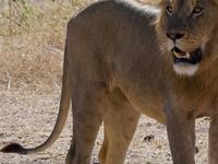 Kenyan Safari - Lake Nakuru