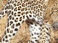 Discover Kenya Safari