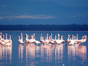 5 Days Safari in Kenya Fotos