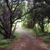 Lake Waikareiti Walk