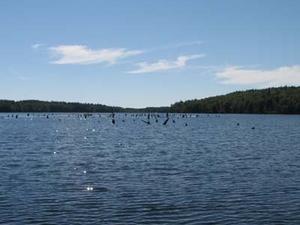 Lake Winchester