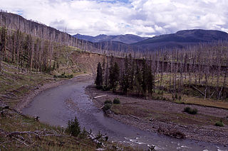 Lamar River - Angling - Yellowstone - Wyoming - USA