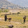Landscape Along River Nile In Ethiopia