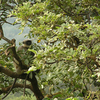 Langur At Amboli Falls