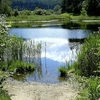 Lanser Moor, Tyrol, Austria