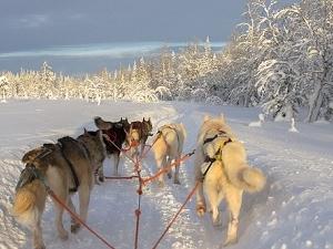 Winter Wonderland In Finland Photos