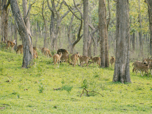 Bandipur National Park Holiday Package