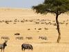 Large Herd Of Herbivores