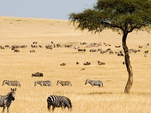 Maasai Mara Game Reserve Travel Leads