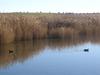 Las Tablas De Daimiel National Park
