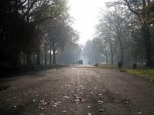 Late Autumn Morning