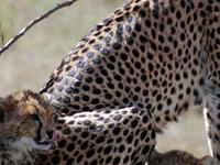 Masai Mara Road Package from Nairobi