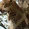 Rohtak Zoo