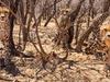 3 Days Come Closer to Wildlife Tour