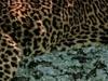 4 Days Affordable African Safari Tour