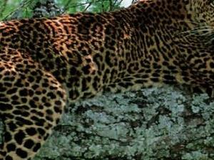 4 Days Affordable African Safari Tour Fotos