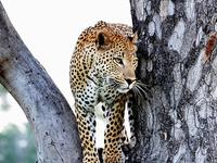 The Kruger National Park Explorer