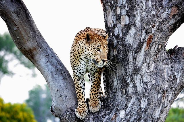 The Kruger National Park Explorer Photos