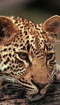 Leopard Luxury Safari