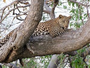 10 Days, Tanzania Safari Fotos