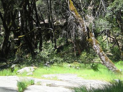 Lewis Creek Trail