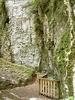 Limestone Outcrops, Ruakuri Walk