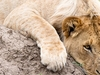 6 Days 5 Nights Amboseli, Lake Naivasha And Masai Mara