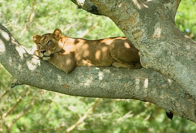 3 Days Queen Elizabeth National Park Tour Photos
