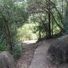 Lion Rock Trail Views