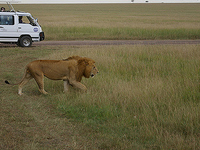 Kruger National Park - Private Game Drive Tour