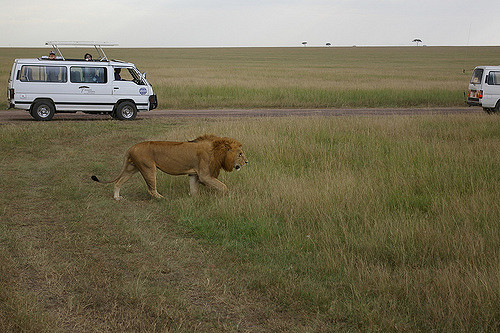 Kruger National Park - Private Game Drive Tour Photos