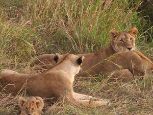 Masai Mara Budget Camping Safari Photos