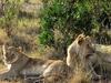 Conservation Safari