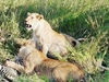Serengeti And Ngorongoro 3 Days Budget Camping Safari