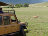 7 Days 6 Nights Join Group Serengeti Wildebeest Migration